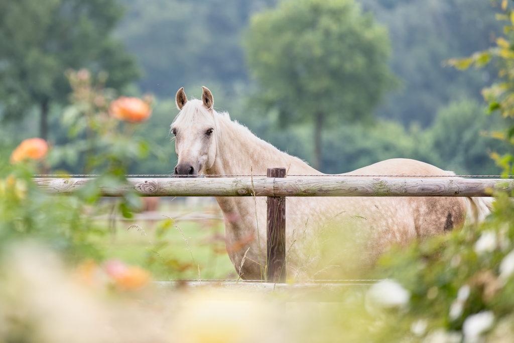 Ein Pferd in der Pferdepension Börger in Gescher
