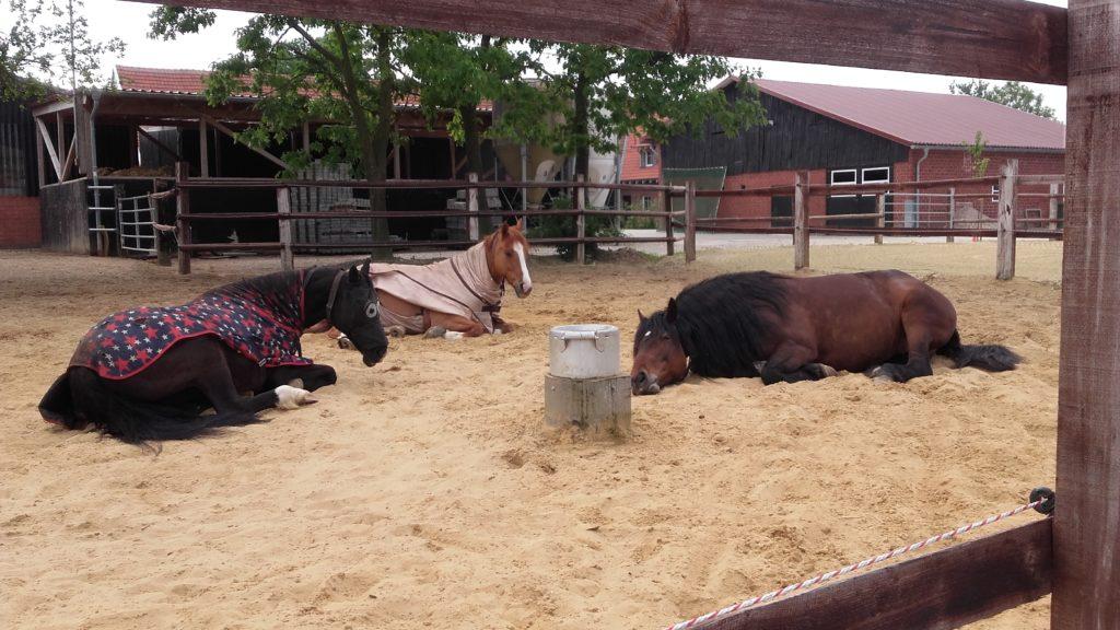 Außenanlage mit Pferden