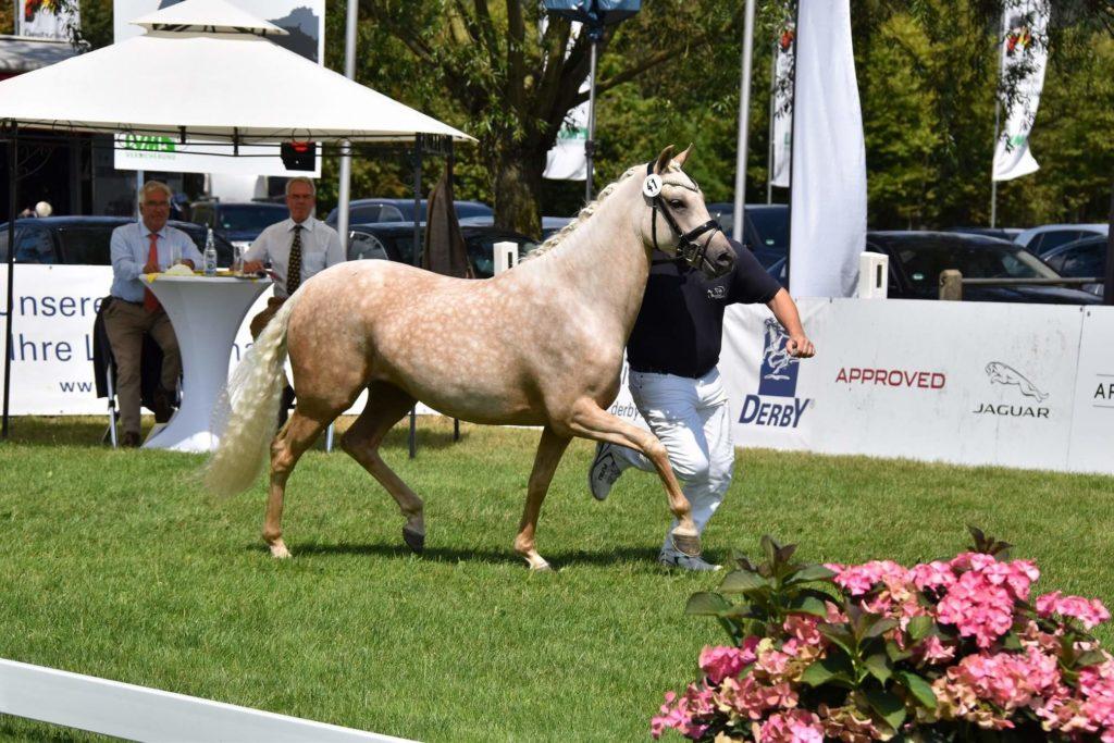 Pony Daidree
