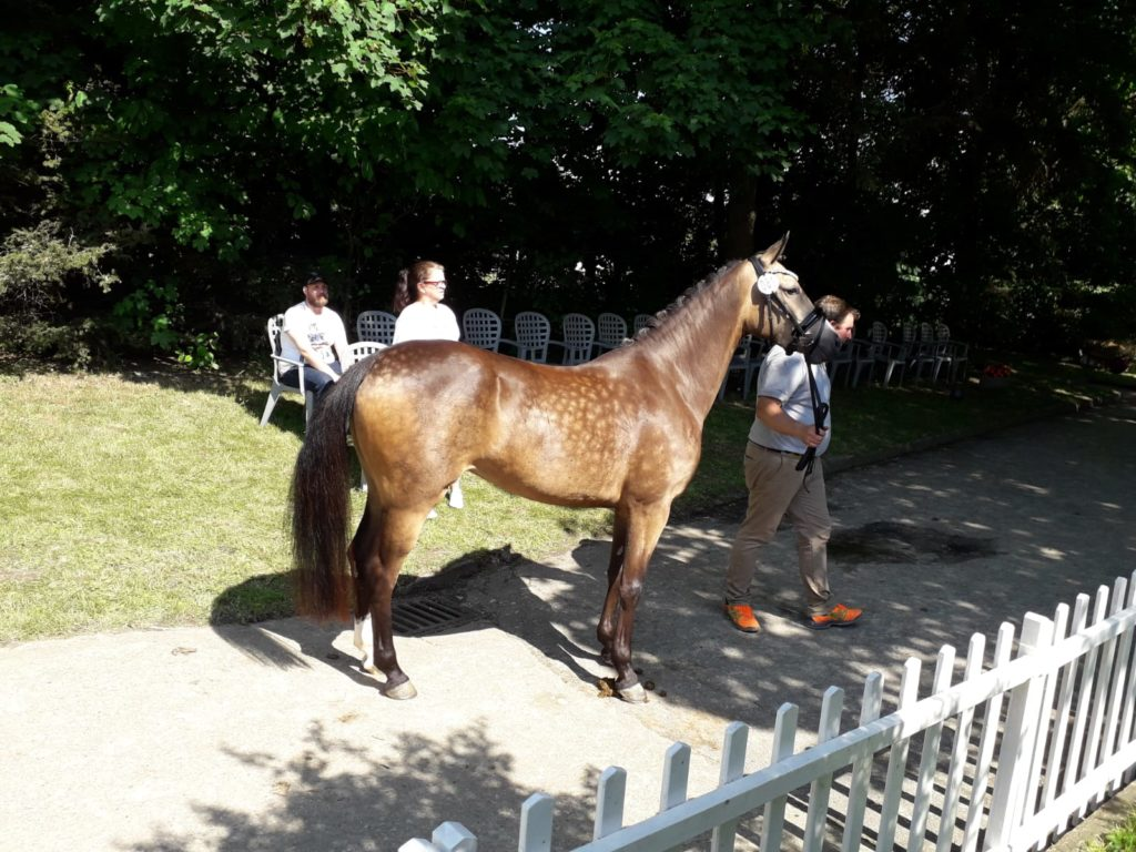 Pony Dance Wonder