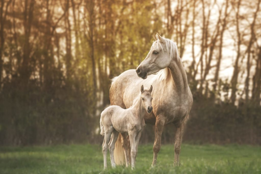 Pony Darling Alinor