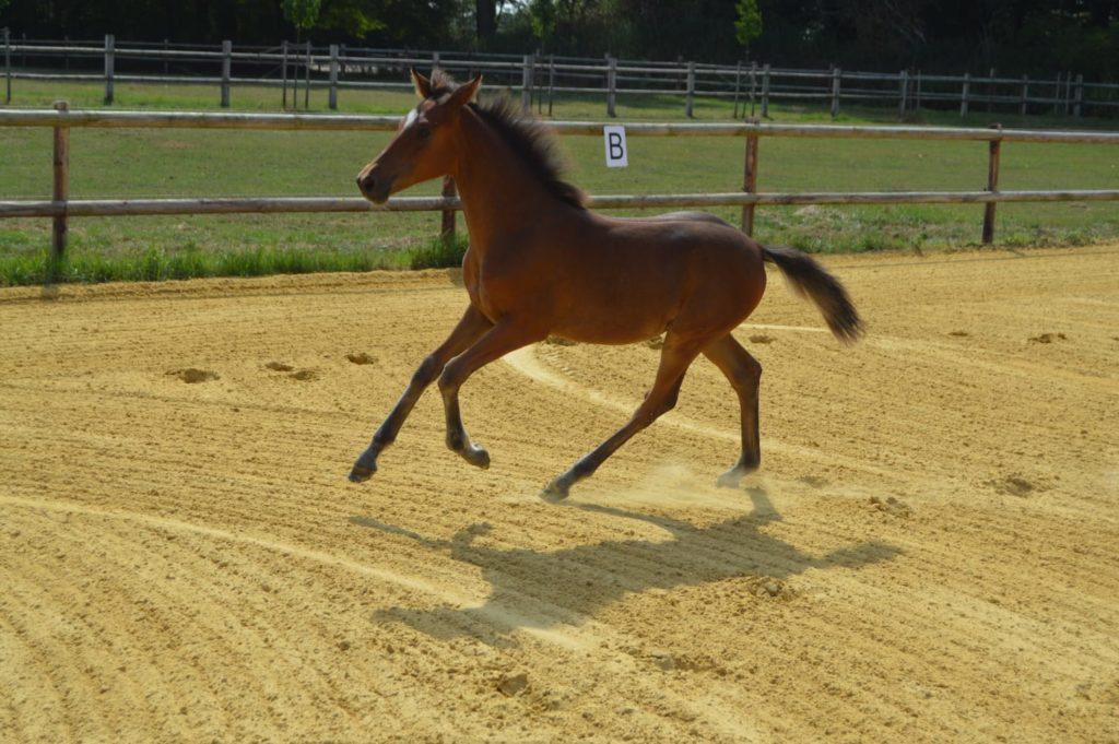 Pony Delia
