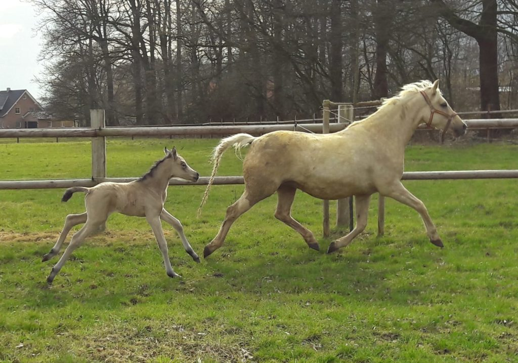 Pony Doppelpunkt